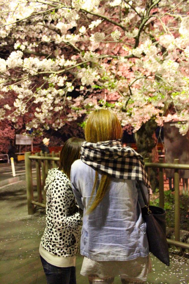 角館,桜,さくら