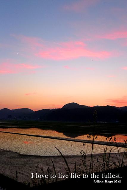 夕日と田んぼ2